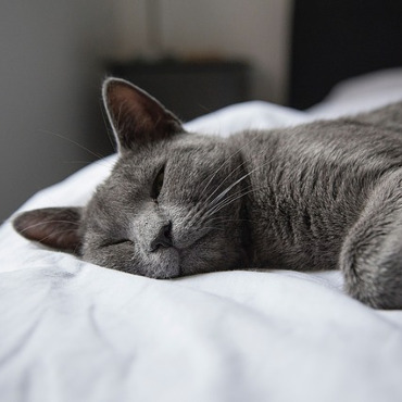 keep pets out of the bedroom for uninterrupted sleep