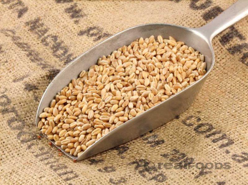 How do I cook Wheat Grain?