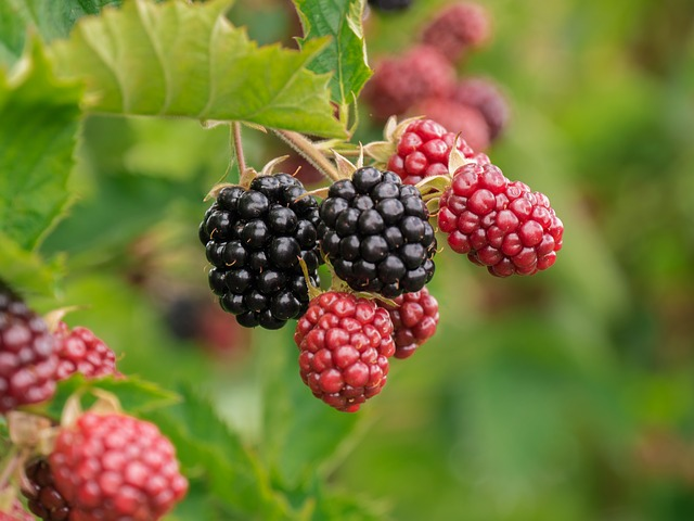 Fruitarian diets
