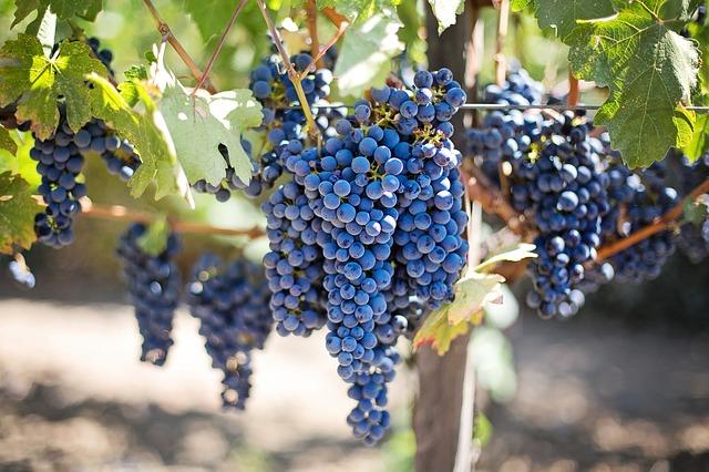 organic biodynamic vegan wine