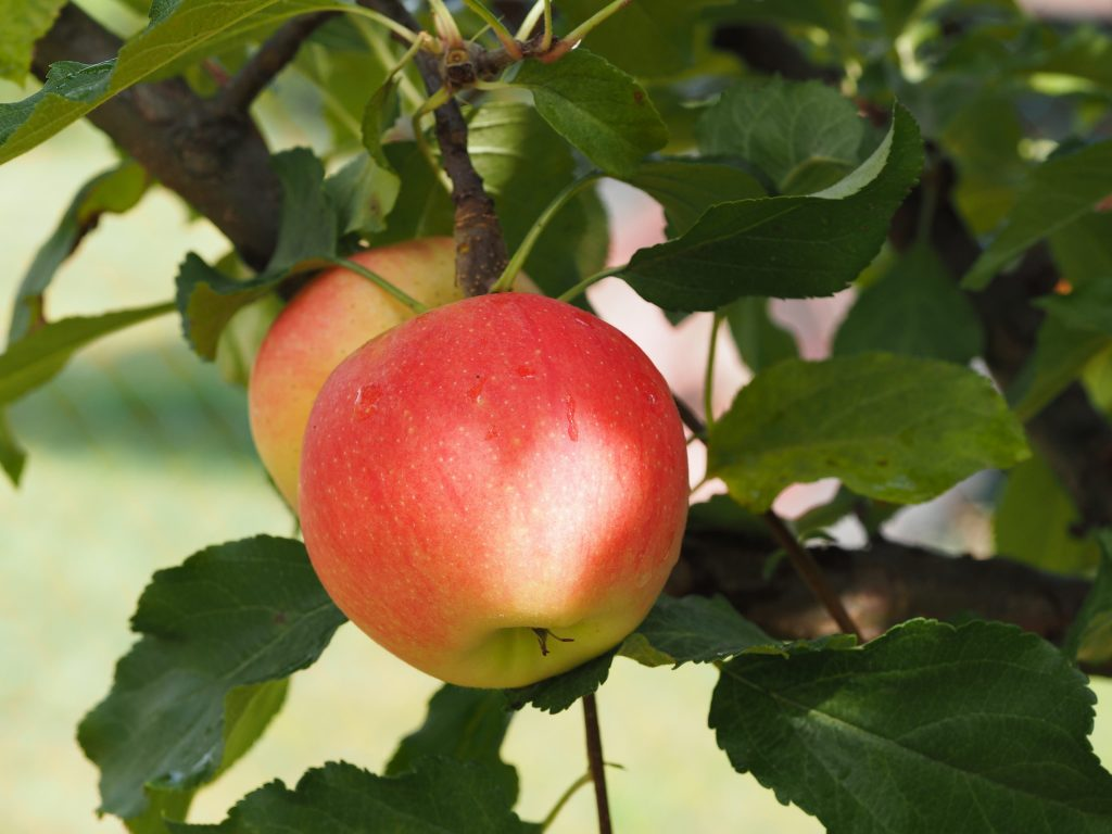 best foods to boost your immunity apples